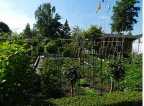 Examples of urban agriculture at the De Zuiderhof allotment garden in Rotterdam.