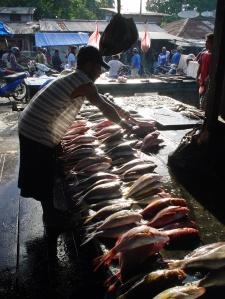 Fish pic
