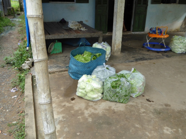 Vegetables packed and ready for the market.