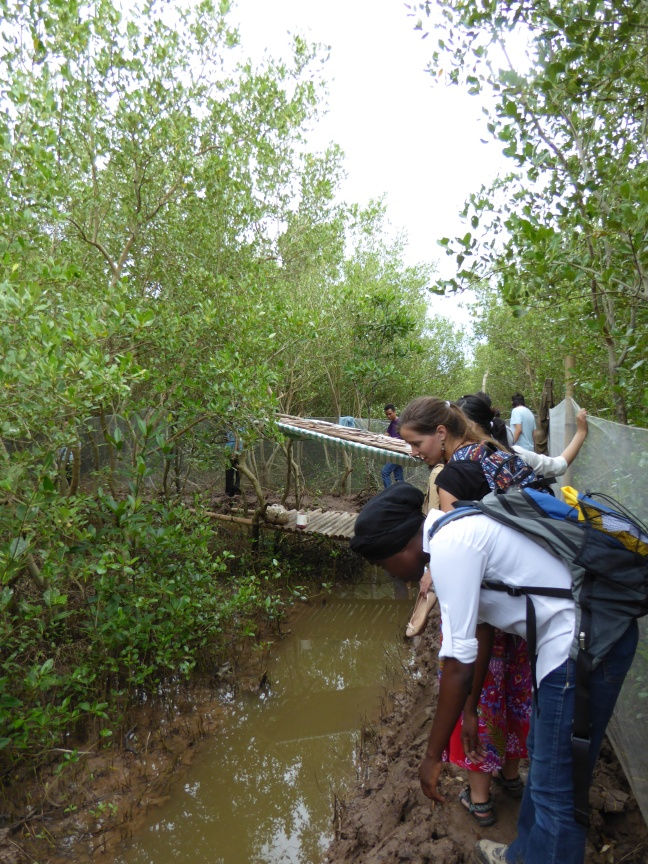 Students visit the mangroves. No one fell in the mud, but it was close!
