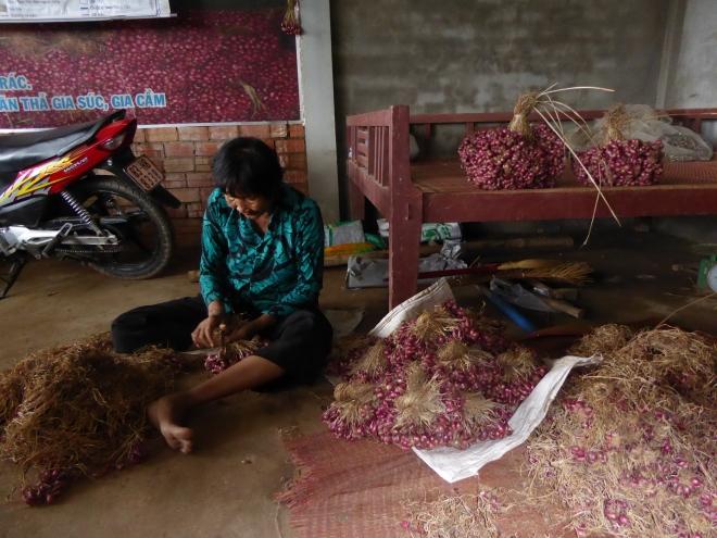 Women saving onions for seed