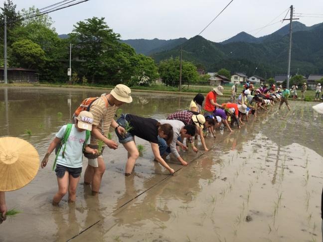 Rice planting.jpg